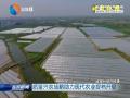 【时政纵横】质量兴农战略助力现代农业提档升级