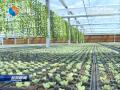 盐都台创园: 聚焦花卉产业  打造美丽经济