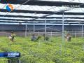 发展现代高效农业 接轨上海提速加码