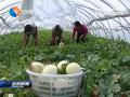 我市已建成农业产业化联合体11家