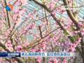 桃花满园映春色富民增收新路径