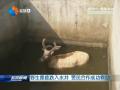 野生麋鹿跌入水井 警民合作成功救助