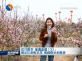 【花开盛世 绿满盐城】(3)桃花红雨梨花雪 桃园春光无限好