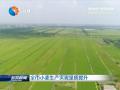 全市小麥生產實現量質提升