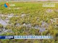 鹽城黃海濕地申遺成功引發各方關注