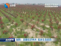射陽:發展經濟林木繪濃生態底色