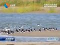 《盐城市黄海湿地保护条例》今日起施行