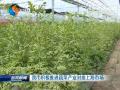 我市積極推進蔬菜產業對接上海市場