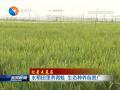 【记者走基层】水稻田里养青蛙 生态种养前景广