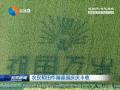 農民稻田作畫迎國慶慶豐收