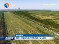 射陽縣新造成片林面積全省第一