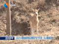 江苏大丰麋鹿国家级自然保护区今年第一头小麋鹿出生