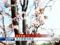 【花开盐城】(2)风光旖旎诗意浓