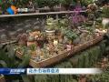 花卉市场春意浓