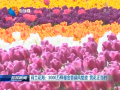 荷兰花海:3000万株郁金香迎风绽放 赏花正当时