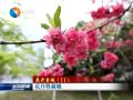 【花开盐城】(11)花开春满城