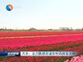 大丰:全力推进农业农村高质量发展