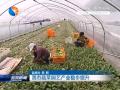 我市蔬菜园艺产业稳步提升