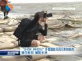 """""""SHOW JIANGSU""""外国媒体摄影采风行来到我市 绿色转型 赋能未来"""