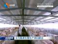 全力推进生猪生产项目建设