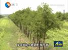 大丰:推进沿海防护林建设 加快构建海疆绿色屏障