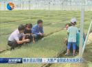【富民路上】响水县运河镇 :大葱产业鼓起农民钱袋子