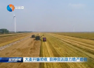 大麥開鐮搶收 良種良法助力增產增收