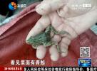 田间偷捕61只青蛙  法盲村妇被处罚
