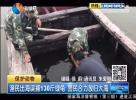 渔民出海误捕130斤绿龟 警民合力放归大海