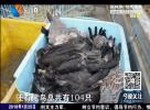公然叫卖野生动物  警方将立案侦查