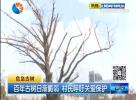 百年古树日渐脆弱  村民呼吁关爱保护