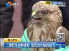 二级野生动物遇险 警民合作助其放飞