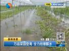 万亩菜园受淹 全力抢排积水