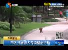 市区开展养犬专项整治行动