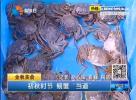 """初秋时节 螃蟹""""当道"""""""