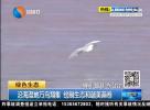 沿海湿地万鸟翔集 绘制生态和谐美画卷