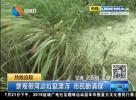 景观带河边垃圾漂浮 市民盼清理