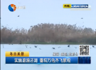 实施退渔还湖 重现万鸟齐飞景观