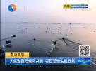 大縱湖百萬候鳥共舞  冬日濕地生機盎然