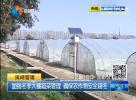 加強冬季大棚蔬菜管理 確保農作物安全越冬