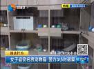 女子盗窃名贵宠物猫 警方3小时破案