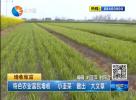 """特色农业富民增收 """"小韭菜""""做出""""大文章"""""""