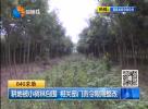 耕地被小树林包围  相关部门责令限期整改