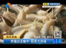 养殖白玉蜗牛 拓宽大市场