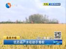 优质高产水稻助农增收